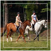 Request Western North Carolina Equestrian Information Packet